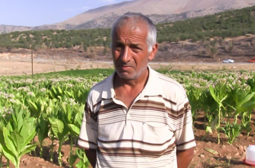 Tobacco grower Erbaş: costs in agriculture are relatively high