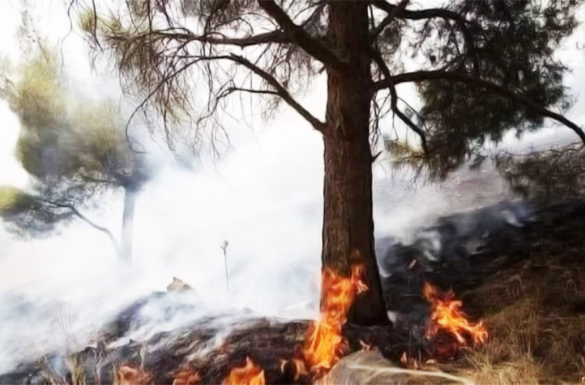 Concerns grow as 'green spaces' in Iraqi Kurdistan are threatened by fire