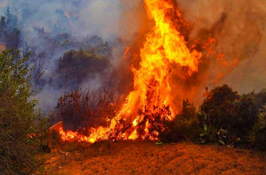 Two suspects detained over the forest fires in Hatay